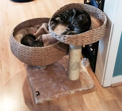 Great PetPals PP9058A Bowl Shaped Lounge The Cats Love It! Free Shipping From  Fast Fashion Pets 626 575 9366 | Pet Supplies | Pinterest | Cat Furniture,  Cat And ...