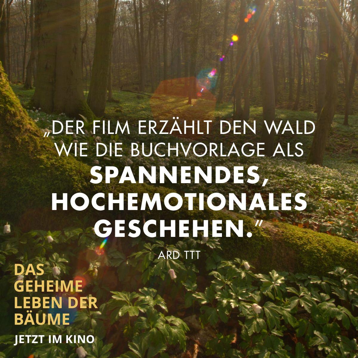 Das Geheime Leben Der Baume In 2020 Constantin Film Leben Filme