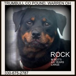 Adopt Rock Urgent On Lost And Found Pets Pittsburgh Pa W V