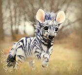 Baby Zebracorn  Fantasy bewegliche Kreatur von RikerCreatures  TIERE