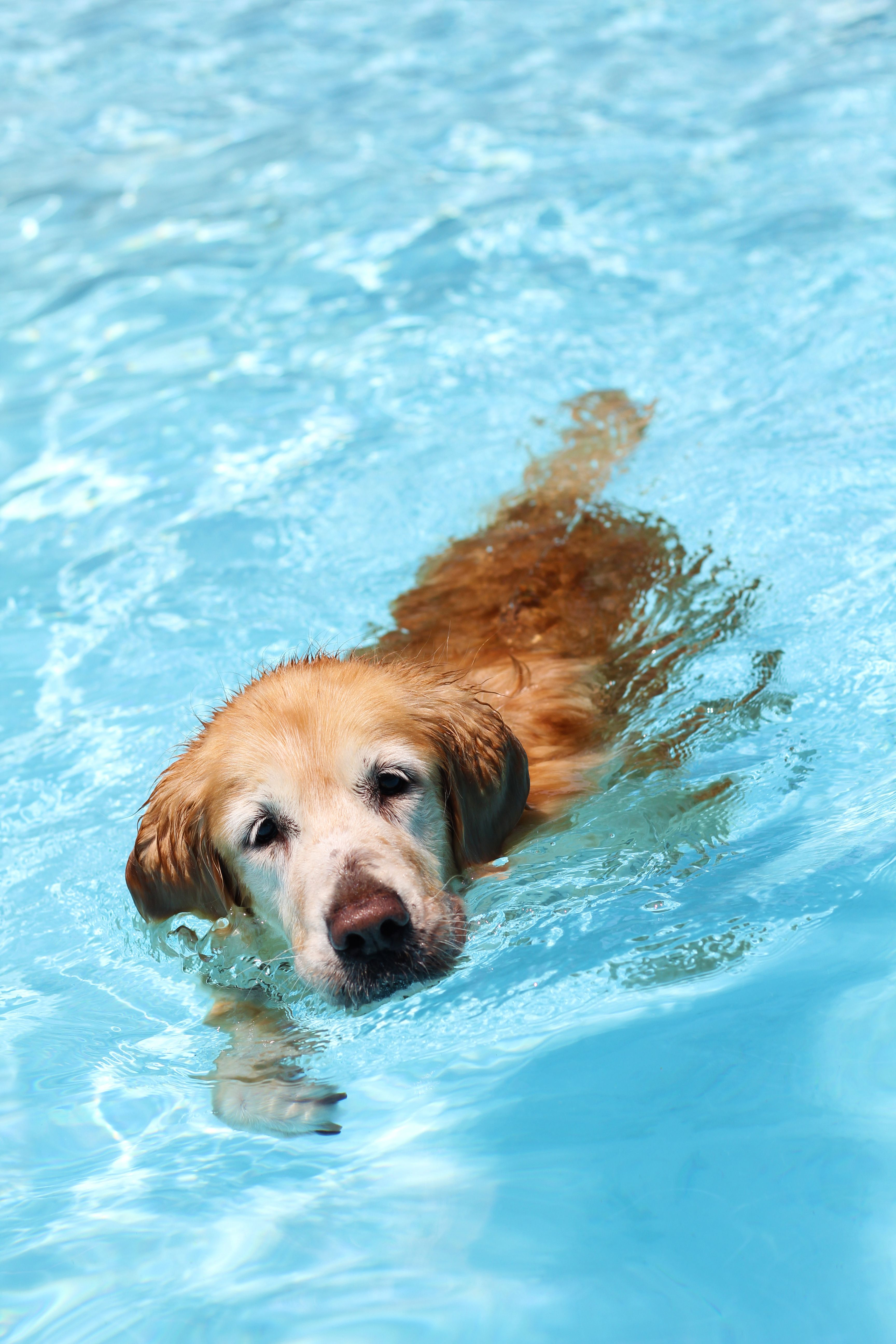If You Notice These Signs After Your Dog Has Been Swimming He May