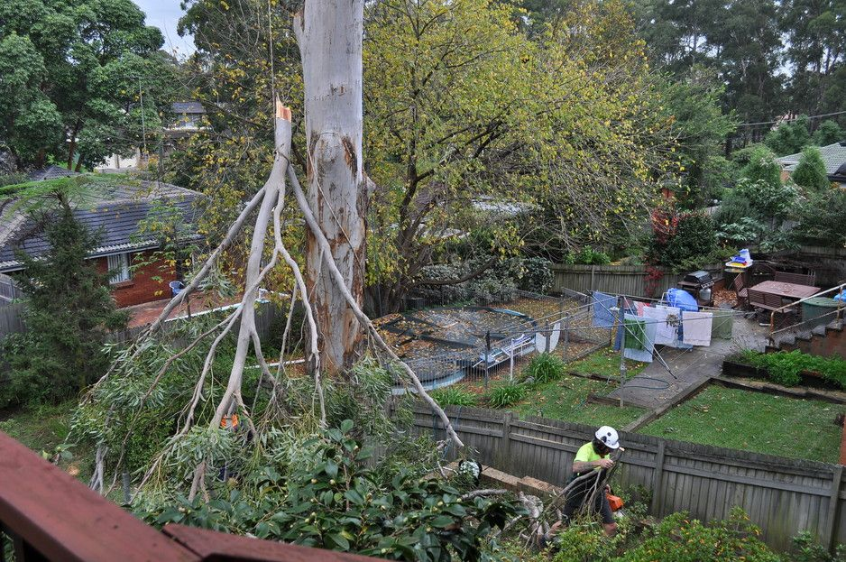 tree cutting prices expert treeremovalblacktown at budget prices no job too big or small tree