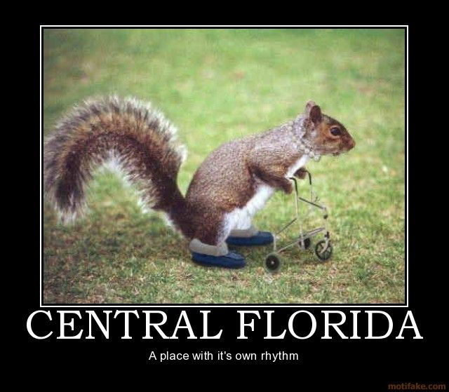 Demotivational Poster Duct E The Applications Are Endless Funny Squirrel Pictures Squirrel Funny Squirrel Pictures