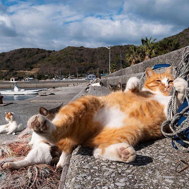 кошка отдыхает картинки прикольные мехенди