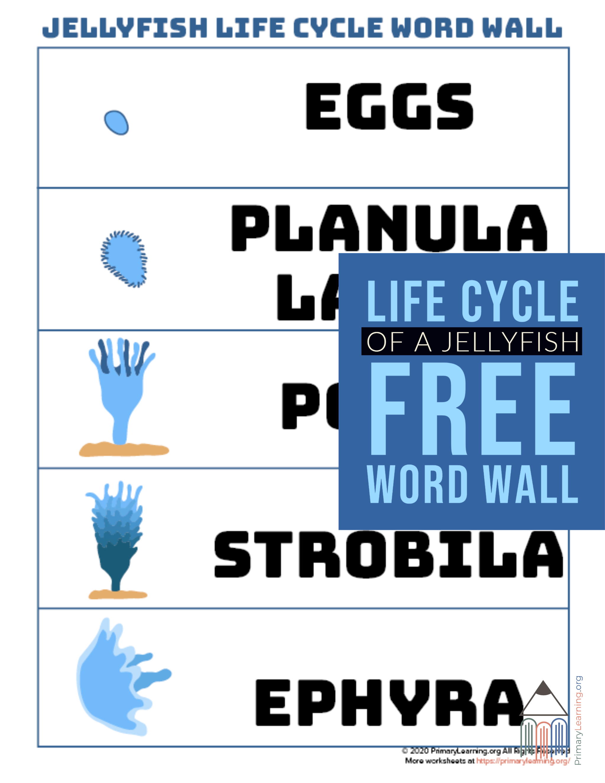 Jellyfish Life Cycle Word Wall In