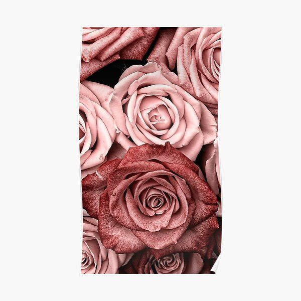 Vintage Roses Poster by Medly
