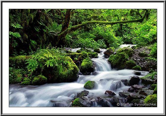 ... Pacific Northwest | Streams & Waterfalls - Page 4 | Rainforest Creek