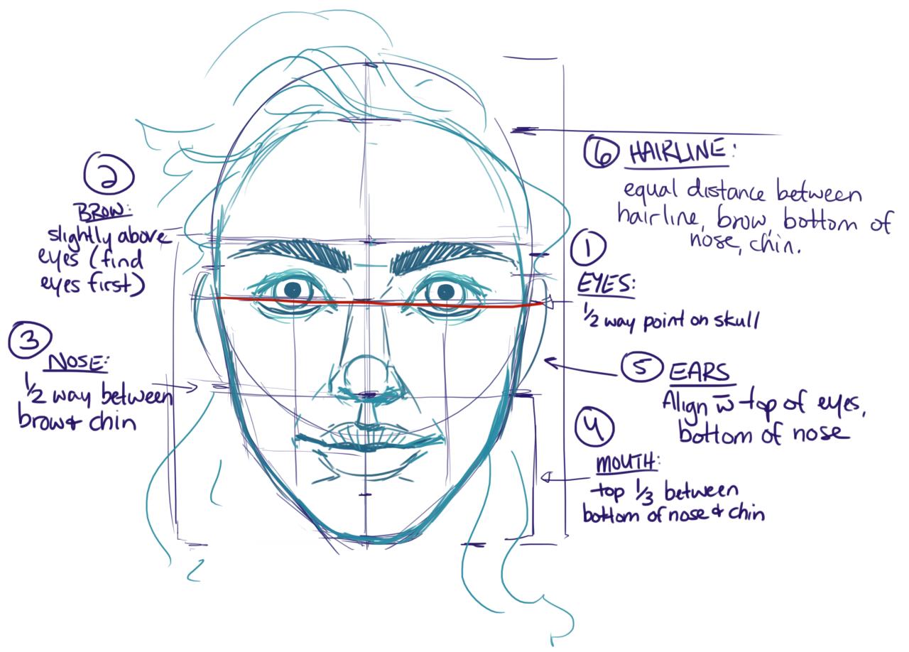 Human Anatomy Reference Photo