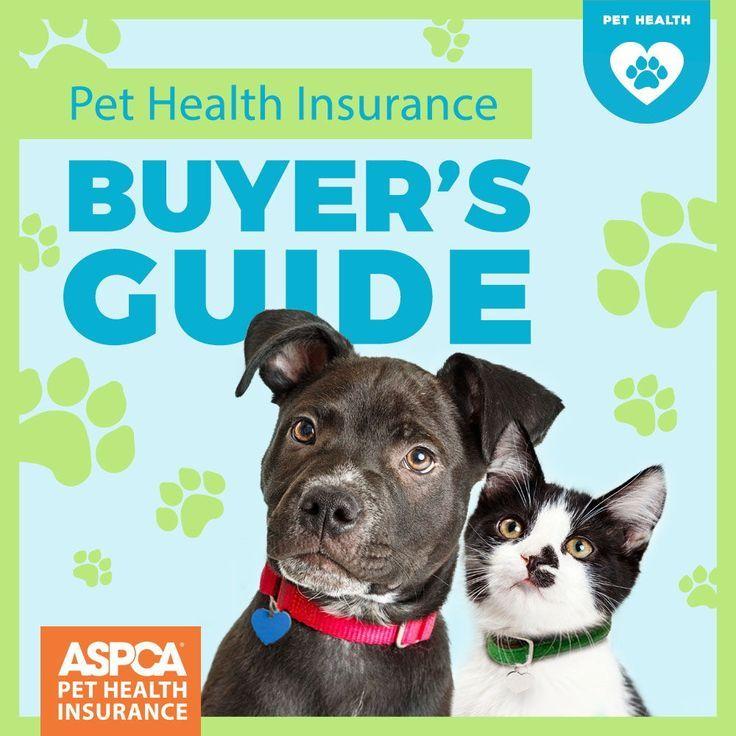 Pet Health Insurance Buyer's Guide in 2020   Pet health ...
