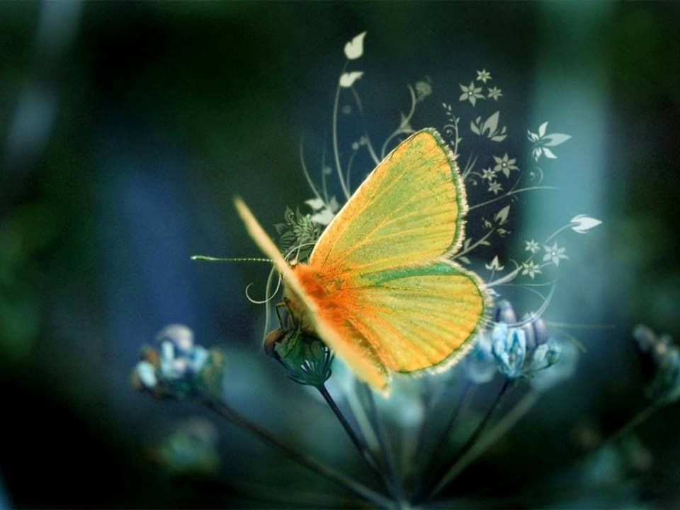 Magical Butterfly Ellenrothauthor Free Desktop