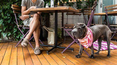 Além de passe livre, casas pet friendly oferecem alguns mimos para o seu animalzinho