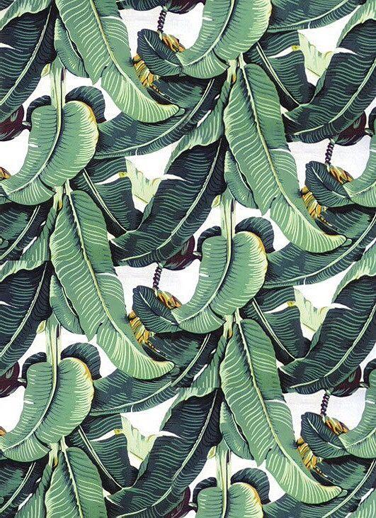 banana palm wallpaper Google Search Martinique