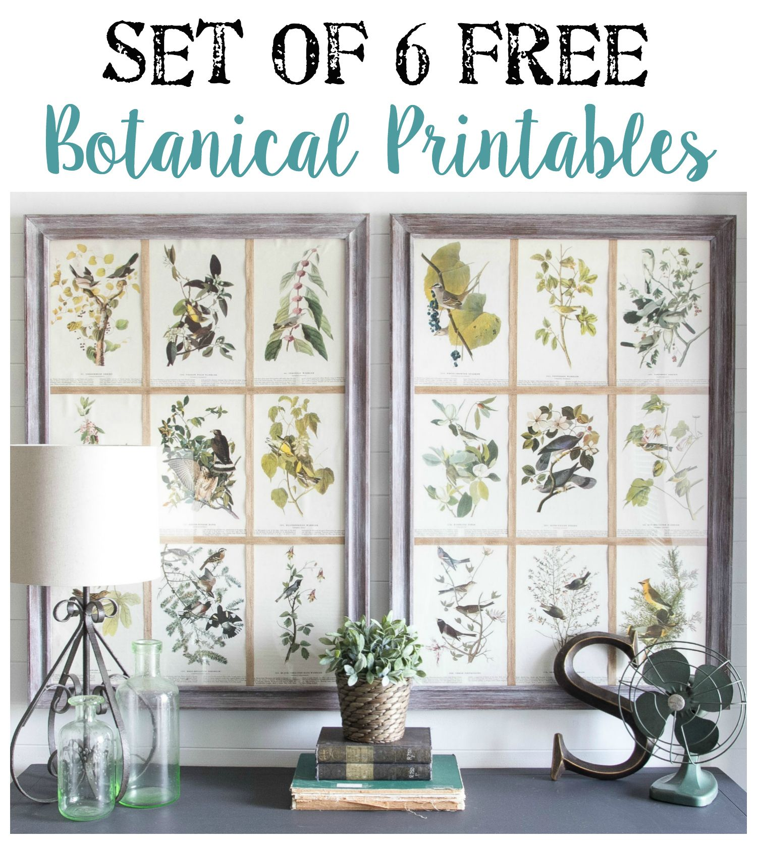 Window Picture Frame and Free Botanical Printables | Window picture ...