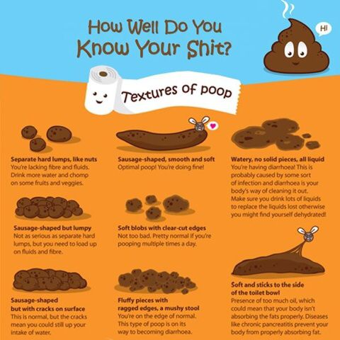 Meaning Of Different Textures Of Poop  Funnies