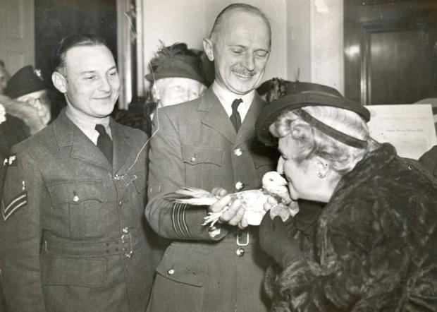 Dickin Medal for bravery Gustav the Gutsy Pigeon Worked