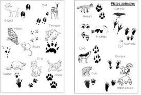 Empreintes animaux de la for t les animaux de la for t - Animaux de la jungle maternelle ...