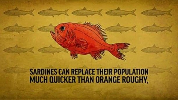 The Orange Roughy Is One Of The Best Examples Of Fish That Have Been
