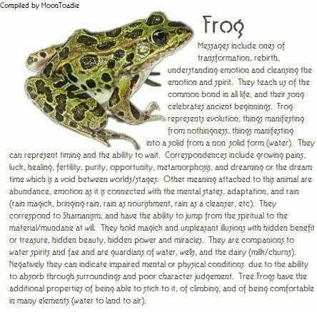 Wow And I Just Recently Had A Frog Come To Me As A Spirit Animal