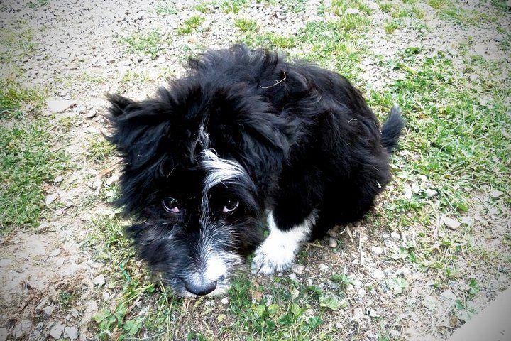 Our dog Perla!