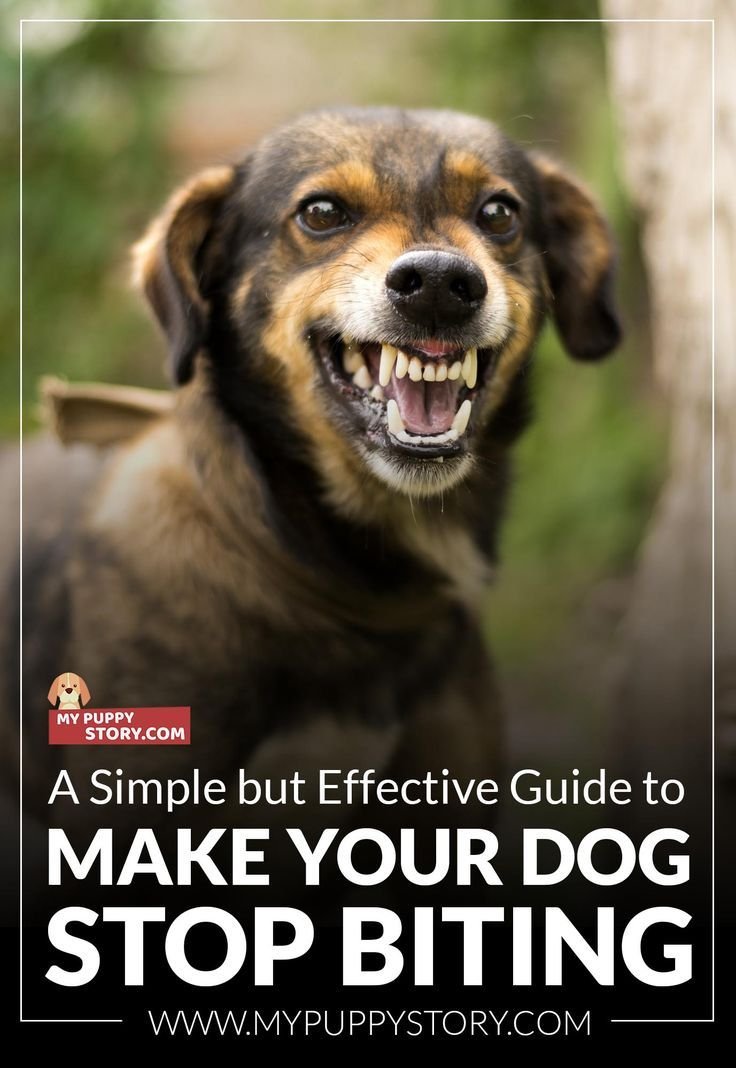 A Simple But Effective Guide To Make Your Dog Stop Biting