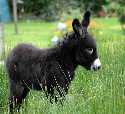 Animals Grass Donkey Baby 2790x2547 Wallpaper Art HD