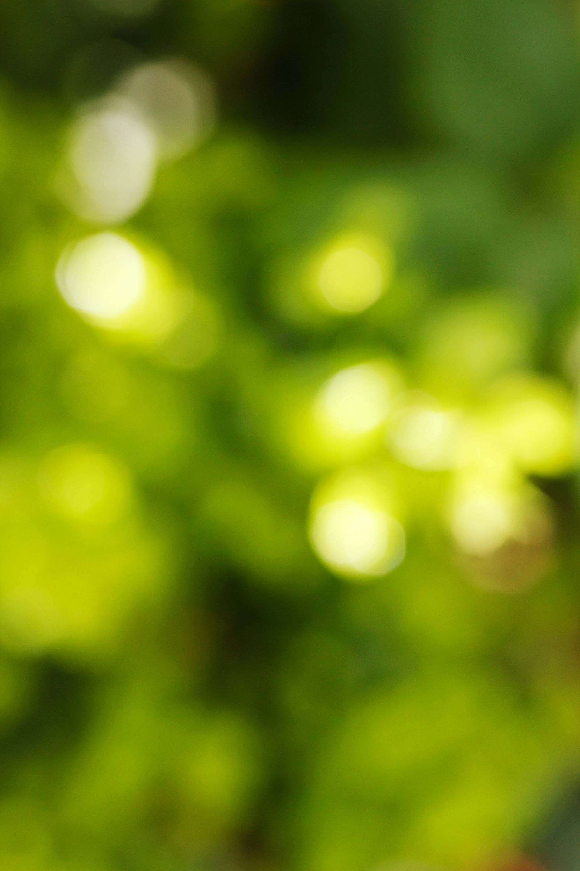 Bright Green Leaves | BOKEH in 2019 | Blurred background