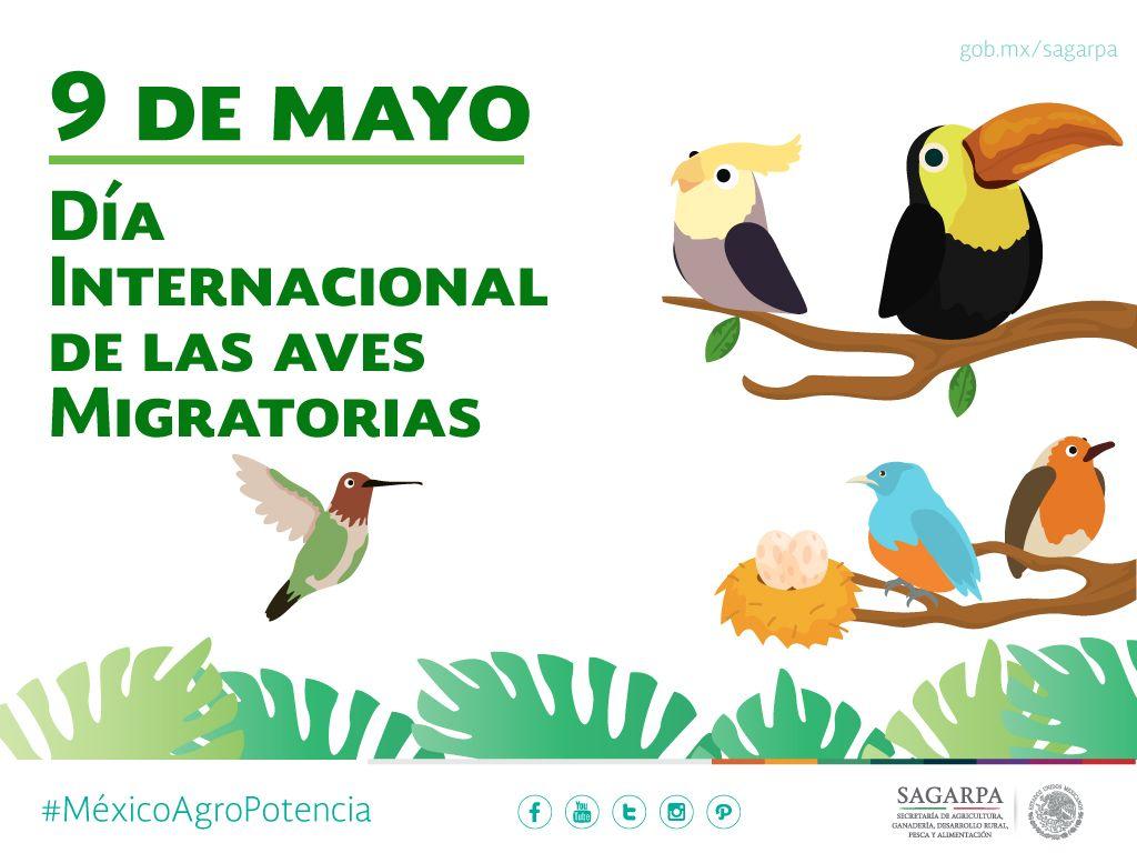 Dia Internacional De Las Aves Migratorias Sagarpa