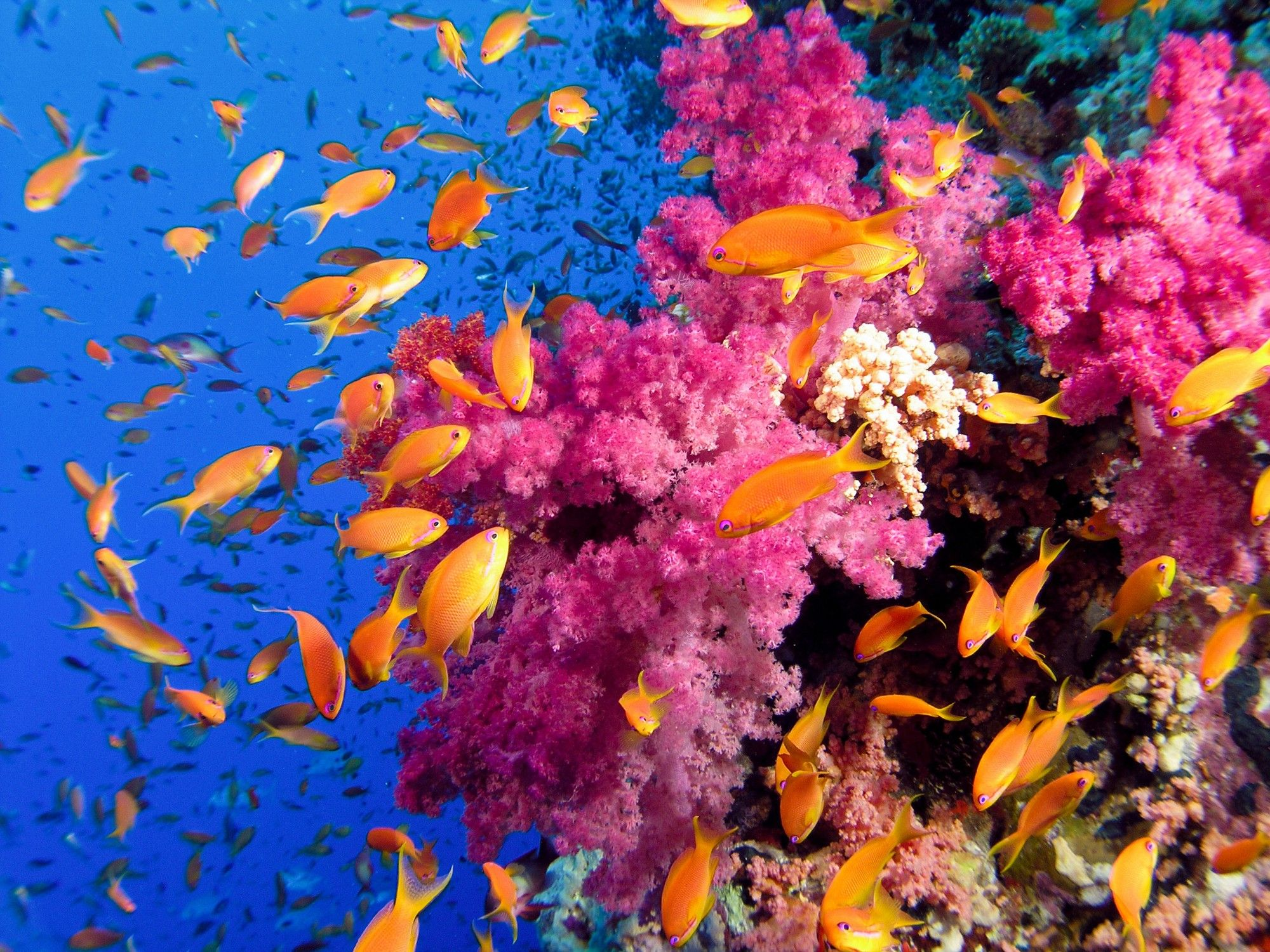 sea underwater reef coral color ocean tropical fish
