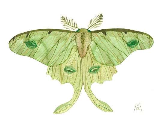 Luna Moth Watercolor Painting Reproduction Green Butterfly Giclee Print