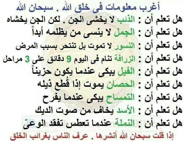 معلومات غريبة عن الحيوانات Arabic Calligraphy Tattoo Quotes Teeth Health