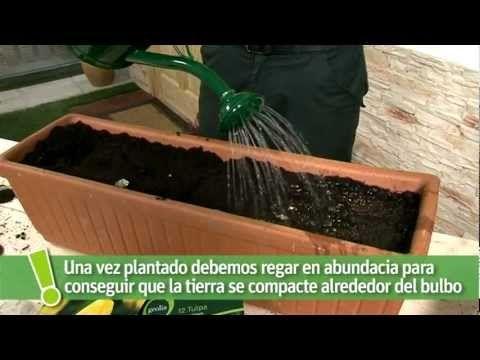 Aprende A Plantar Bulbos Leroy Merlin Jardin Plantar Bulbos