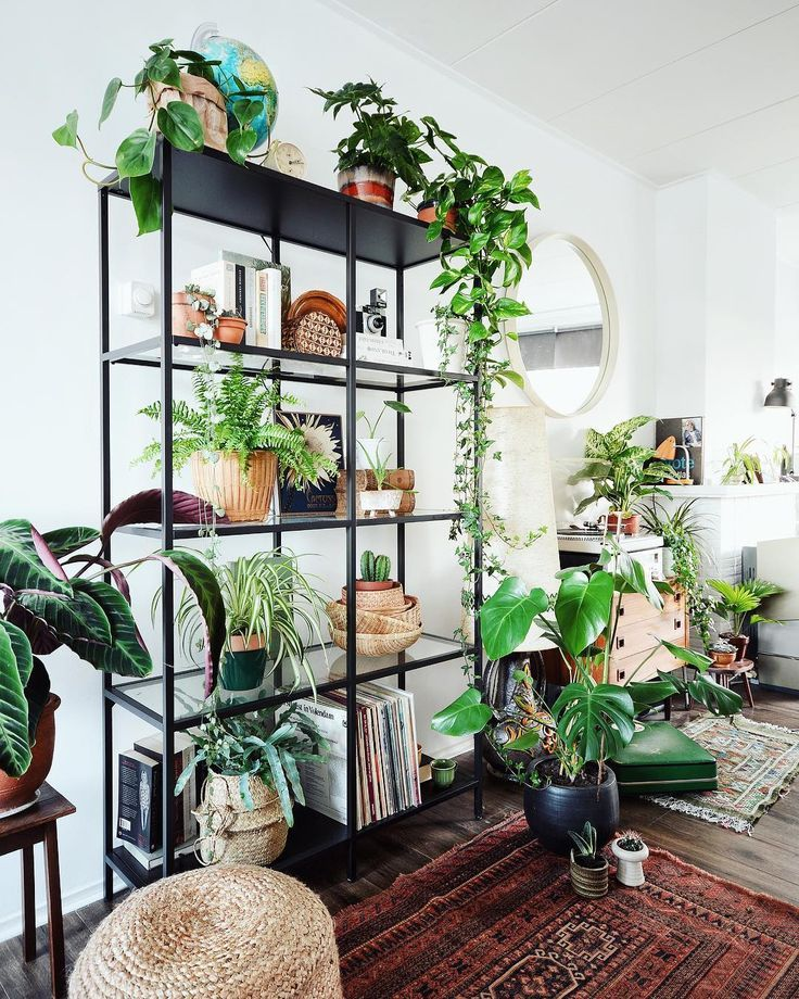 Urban Vegetable Gardening For Beginners: How To Take Insta-Worthy Photos Of Your House Plants