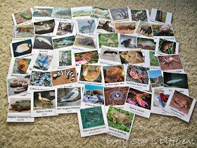 An All American Summer Unit: The United States of America #50freeprintables 50 Animals from the United States of America Cards (Free Printable) #50freeprintables An All American Summer Unit: The United States of America #50freeprintables 50 Animals from the United States of America Cards (Free Printable) #50freeprintables An All American Summer Unit: The United States of America #50freeprintables 50 Animals from the United States of America Cards (Free Printable) #50freeprintables An All America #50freeprintables
