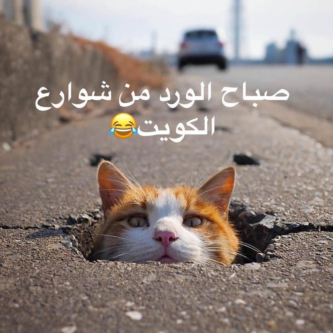 جلنار On Instagram اللي يشوف الزحمة عند محلات المواعين تحسسك إن قبل رمضان كانوا يطبخون لنا في درامات صبغ Cute Cats Nature Animals Animals