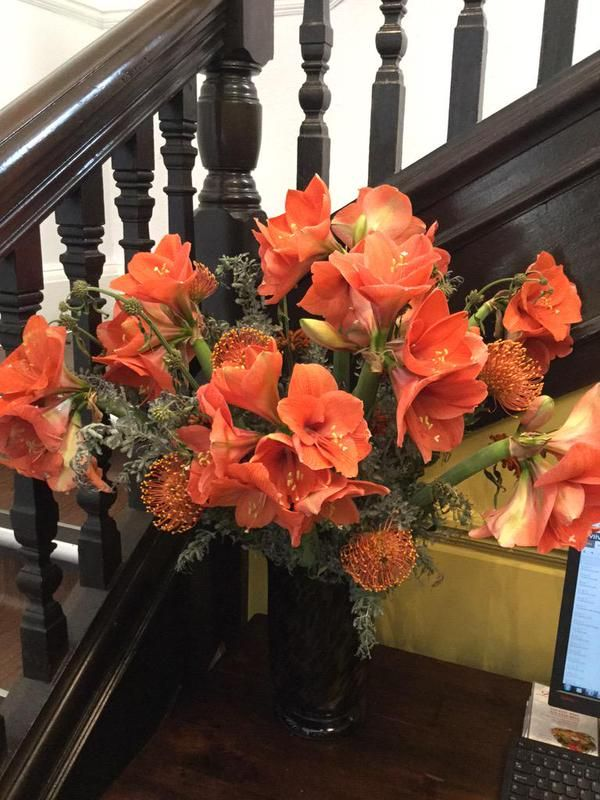 RT @worldloveflower and RT @ydbmf  Blooming beautiful hippeastrum for @StationHotelHG   #amaryllis #flowers https://t.co/OWanV8wjNG