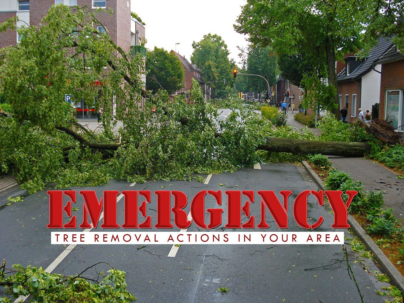 Emergency tree removal when and how to take an action