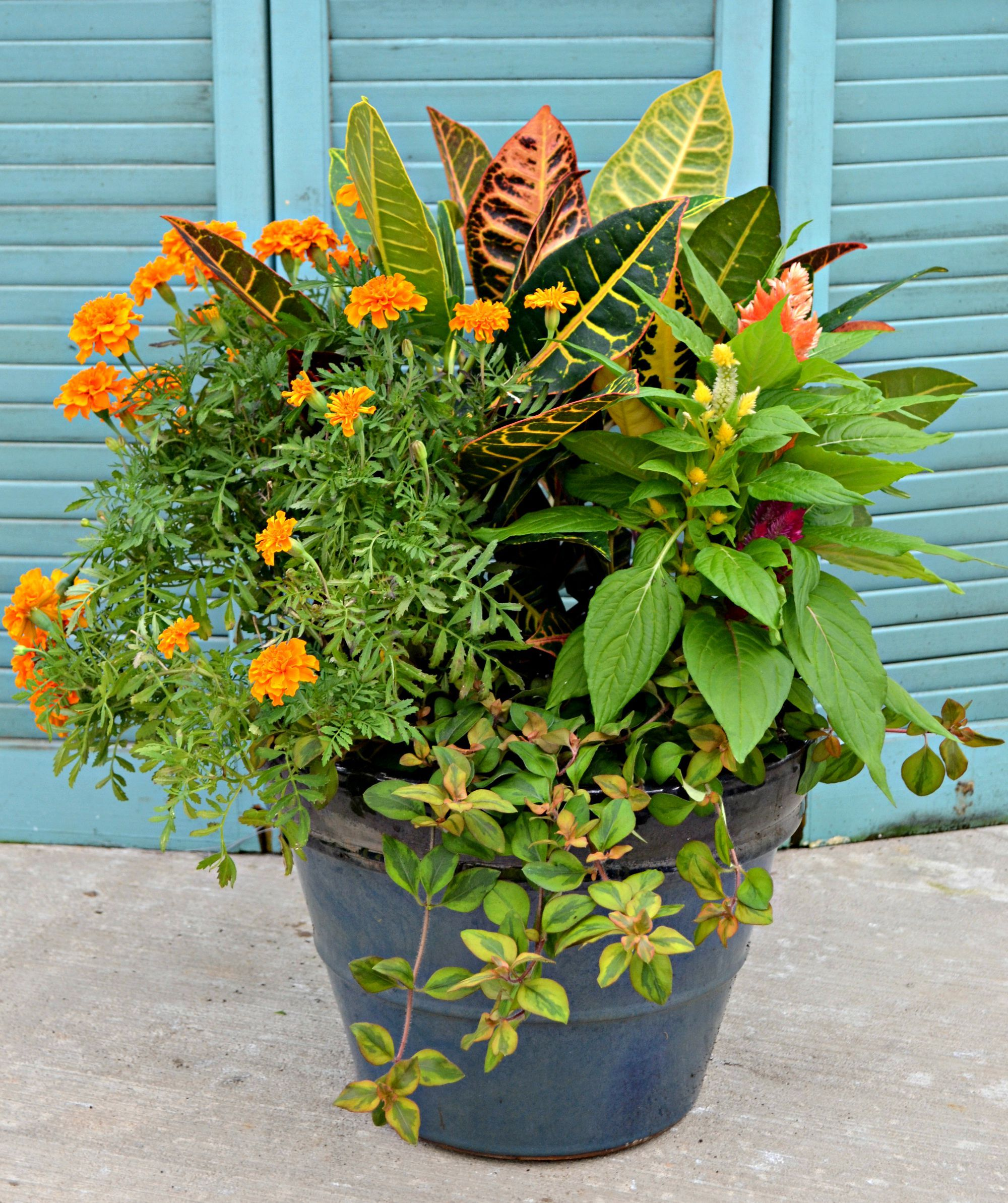 The colors of fall explode from this container combination for Container garden ideas