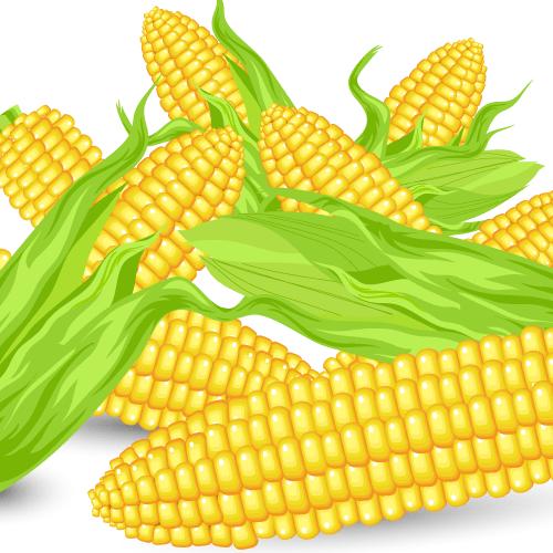 Vector Clipart Corn Vector Food Food Clips