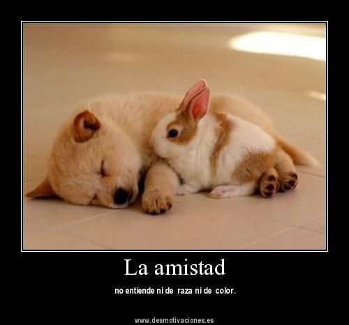Amistad Correspondida Chistoso Google Search Cute Animals Funny Animal Photos Animals Beautiful