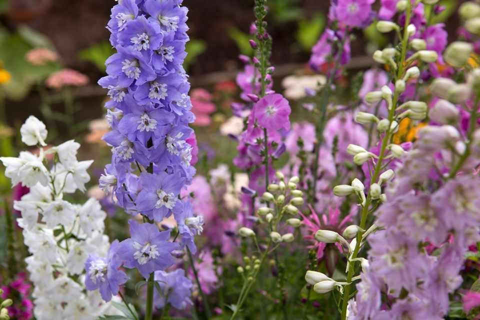 Discover some key plants for a cottagestyle look Cottage garden Beautifulbeautiful