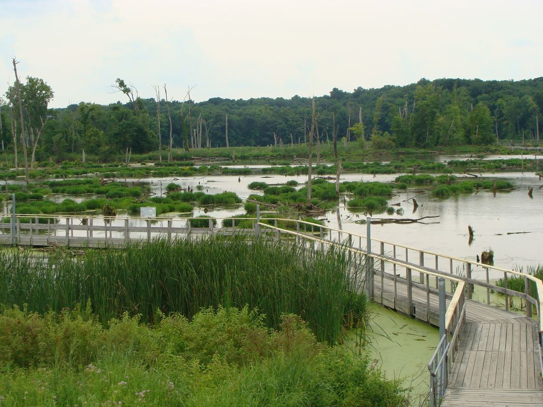 Image result for wetlands boardwalk