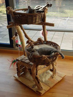 Photo of Ronroneos satisfechos – árboles de madera natural para gatos