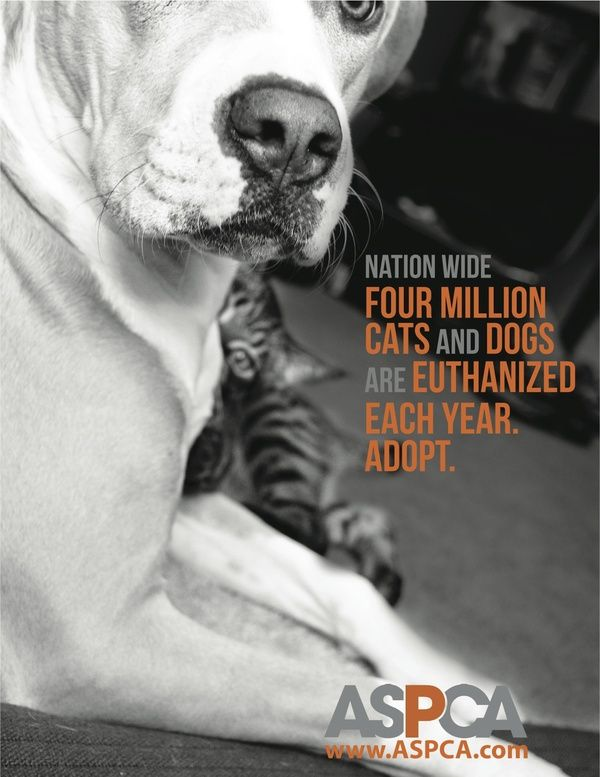 Aspca Online Store Is The Official Store For The American Society