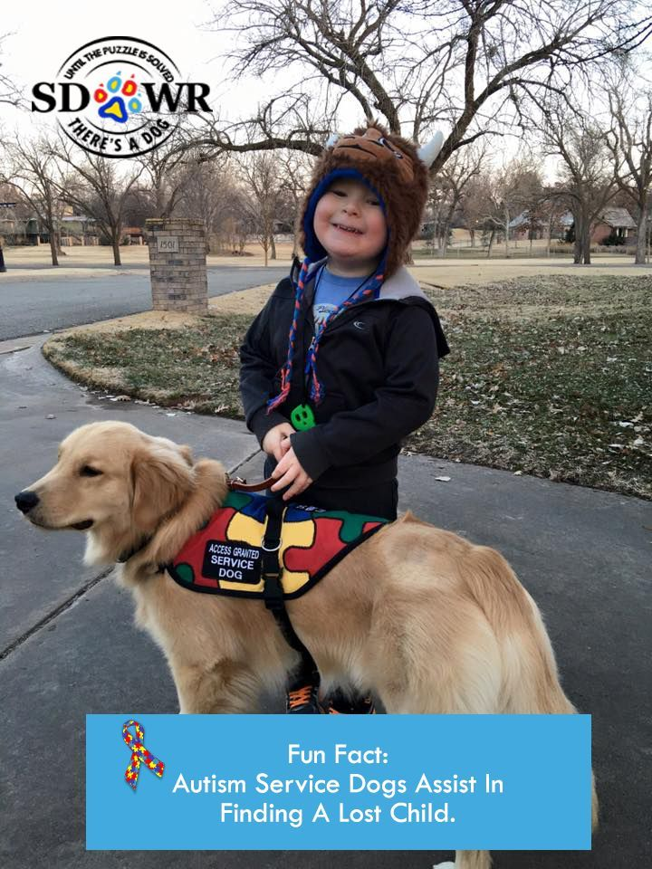 Didyouknow That Sdwr Can Train Autismservicedogs To Perform