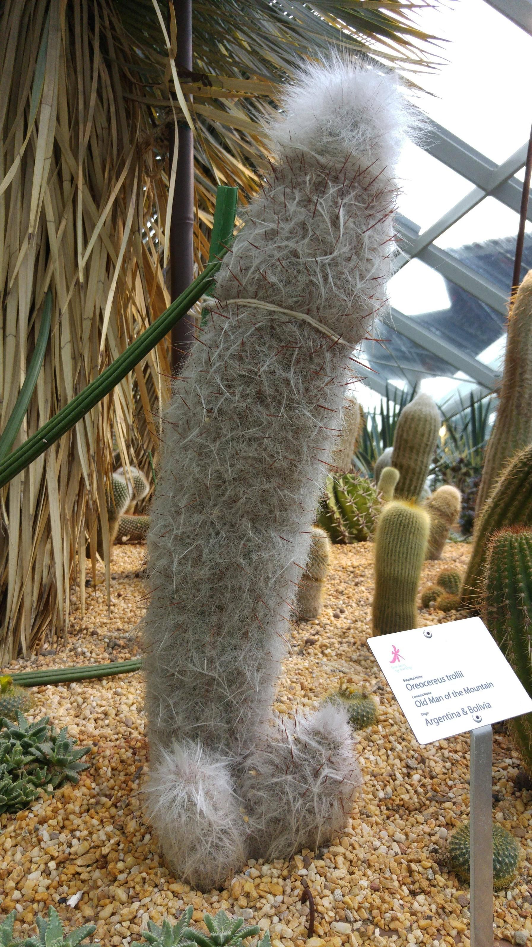 This cactus is called