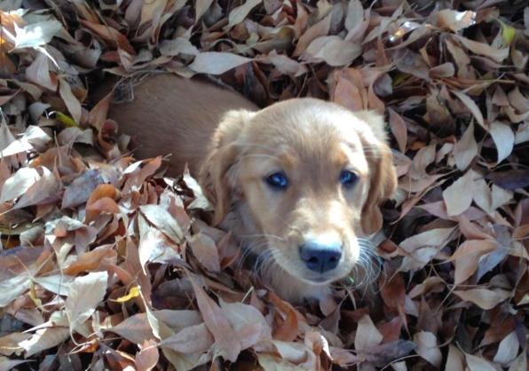 Adopting A Dog California