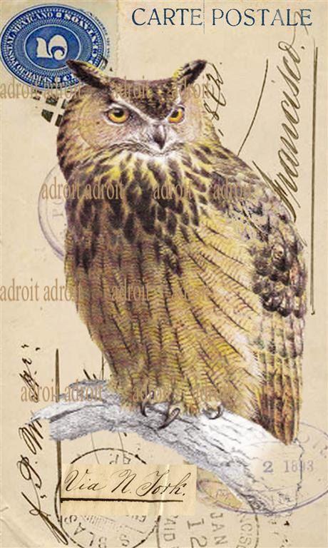 39 vintage owl french carte postale 39 by louis adroit cartes postales pinterest postale. Black Bedroom Furniture Sets. Home Design Ideas