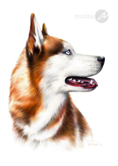 Litter Of 5 Doberman Pinscher Puppies For Sale In Paducah Ky Adn