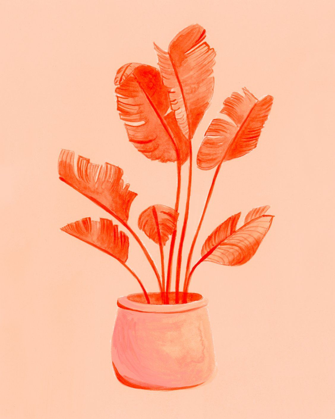 """Coral Banana Plant"" Art by Curious Darling on Society6 