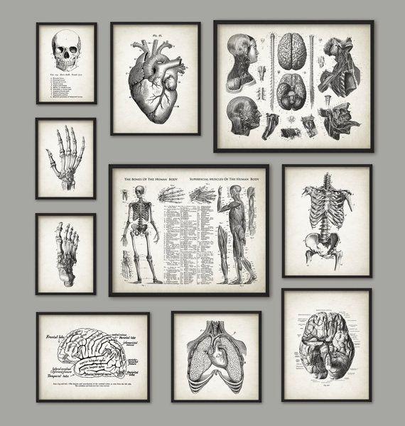 Human Anatomy Antique Art Print Set Of 10